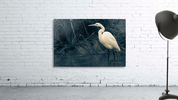 Great White Egret ap 1839 B&W