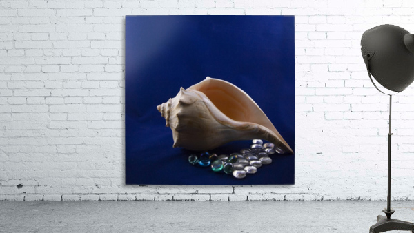 Single Conch Shell With Colored Glass