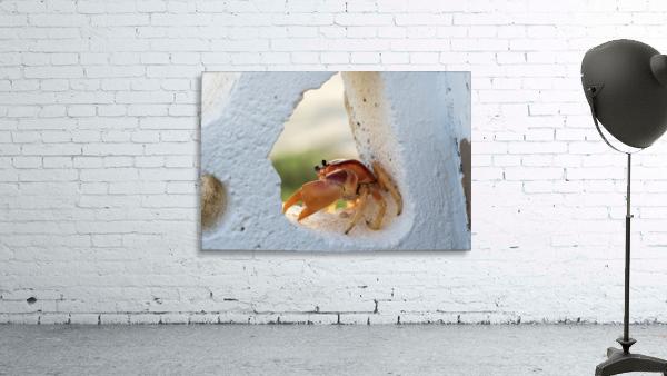 Cayman Crab