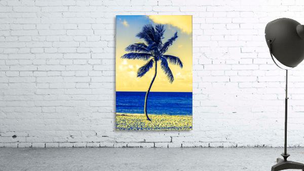 palm color 4