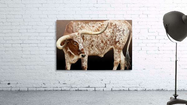 Longhorn Steer Profile 7x5