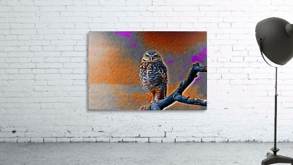 OWL - Stylized