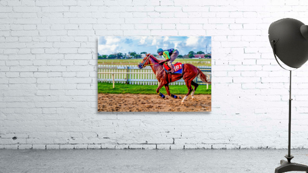 Racehorse10