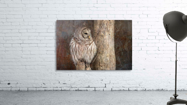 Barred Owl in Grunge