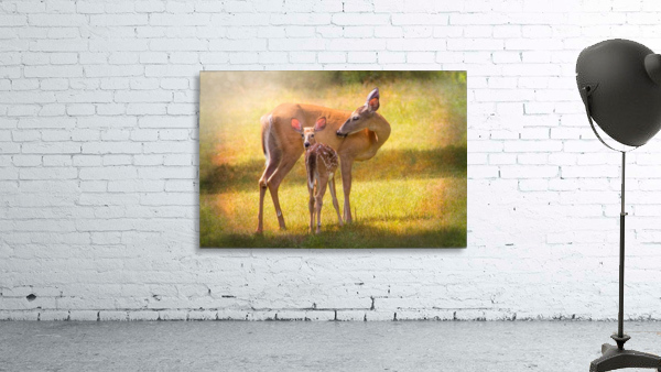 Doe with fawn looking back