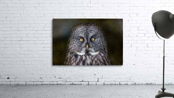Stare Down with a Great Grey Owl