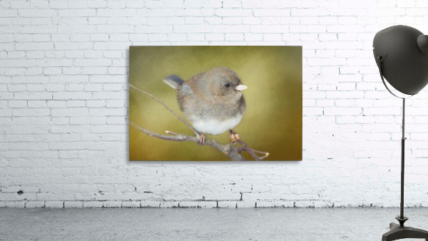 Dark Eyed Junco with Texture