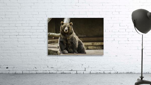Greetings  Brown Bear