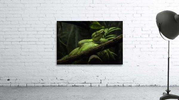 High Detail  Green Boa