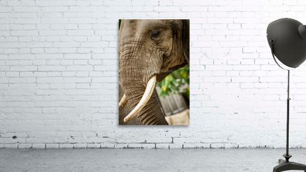 Wrinkles  Elephant