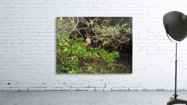 Tropical Bird in Tree