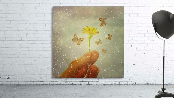 Butterflies Charmer