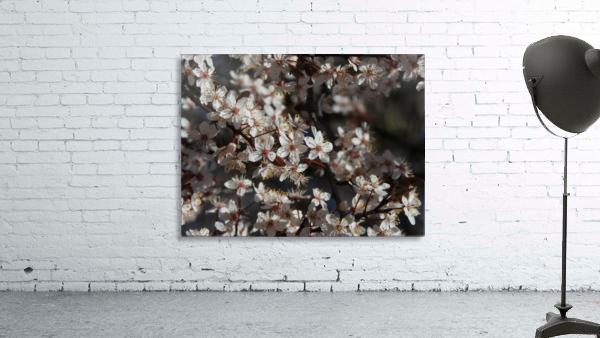 Lovely Blossoms