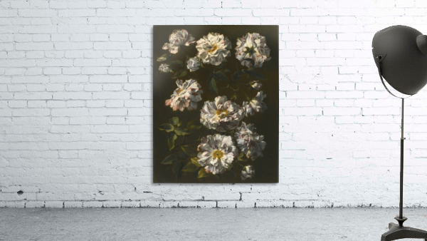 A study of striped white gallica roses