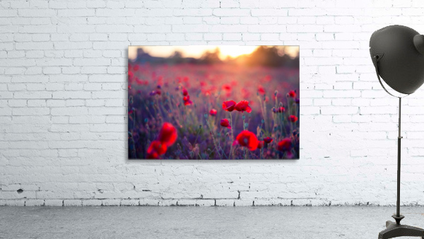 Beautiful Sunset poppy flowers