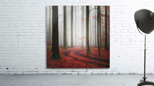 Autumnal Tracks