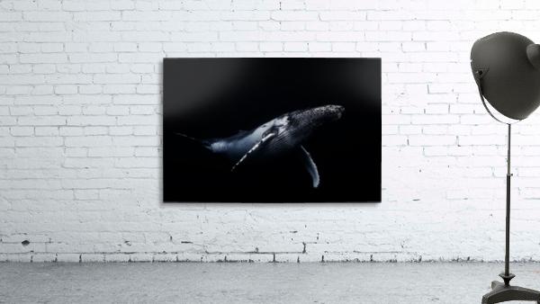 Black & Whale