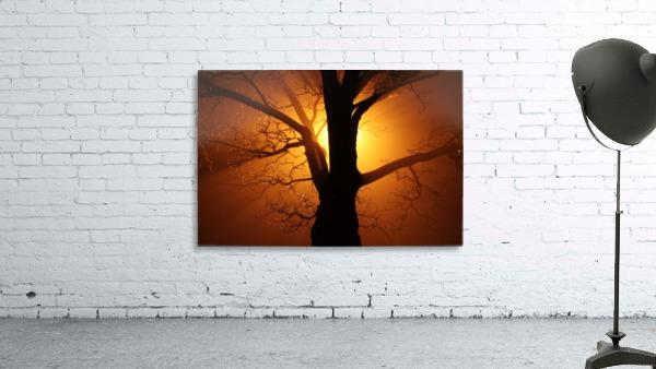 abstract sun tree