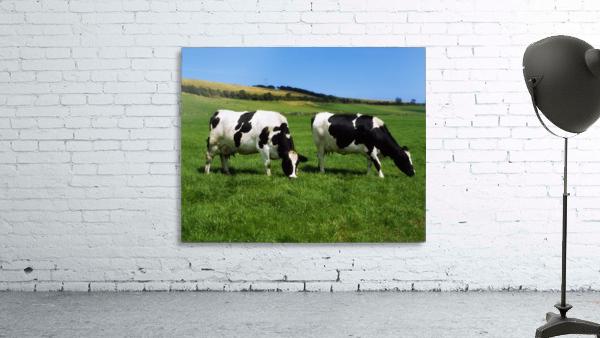 County Cork, Ireland, Dairy Cattle