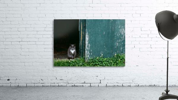 Cat In A Doorway