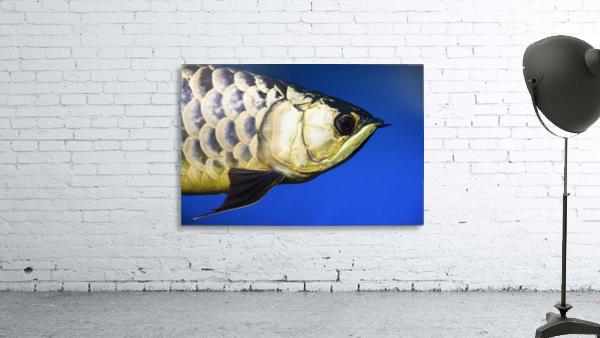 Closeup Of A Fish