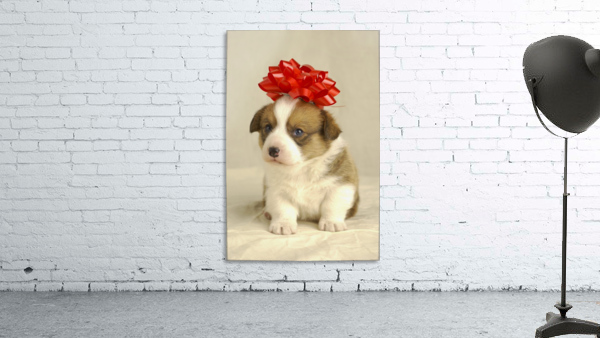 Puppy Wearing A Red Bow