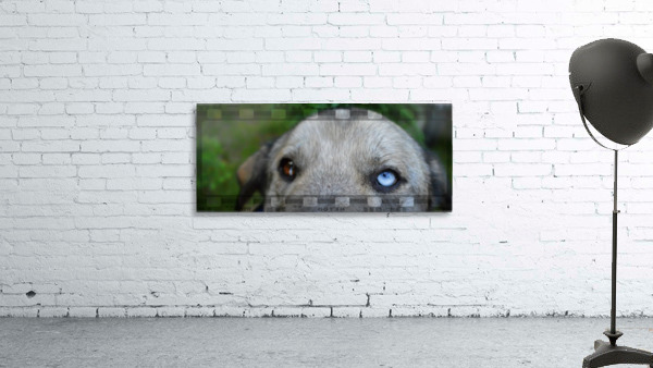 Blue Eyed Dog