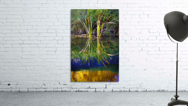Reeds Reflecting On The Water; St. Albert, Alberta, Canada