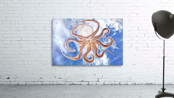 An octopus with blue sky and cloud in the background