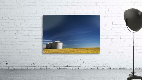 Large metal grain bins in a barley field with blue sky and wispy clouds; Acme, Alberta, Canada