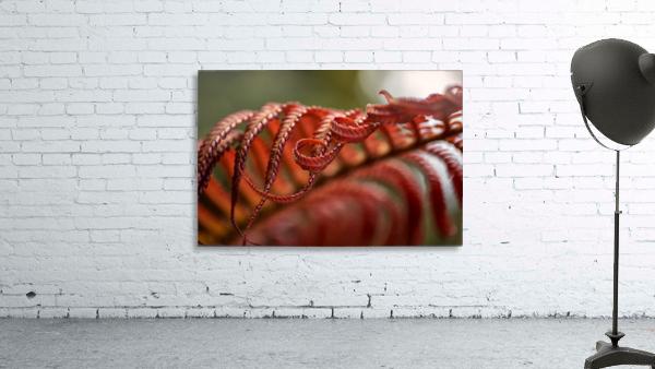 Close up of a crimson Amau fern; Hawaii, United States of America
