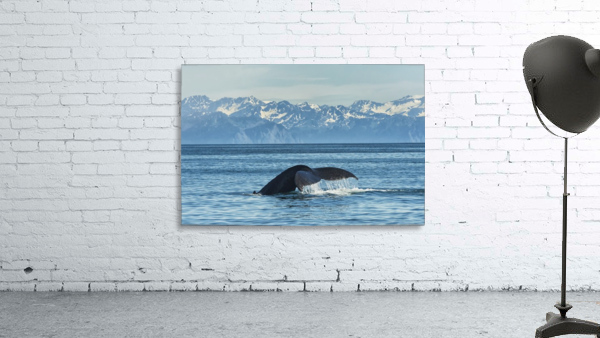 Humpback whale (Megaptera novaeangliae) in Seward harbour; Seward, Alaska, United States of America