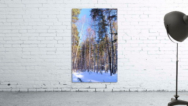 Winter. Forest. Shadow