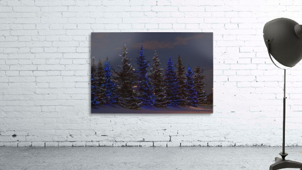 Calgary, Alberta, Canada; A Row Of Evergreen Trees With Christmas Lights