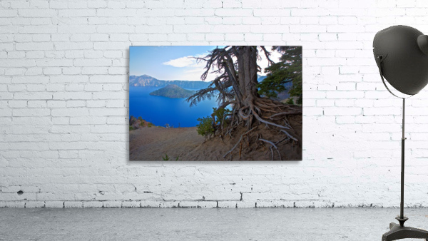 Gnarled White Pine overlooking Crater Lake Aug 2015