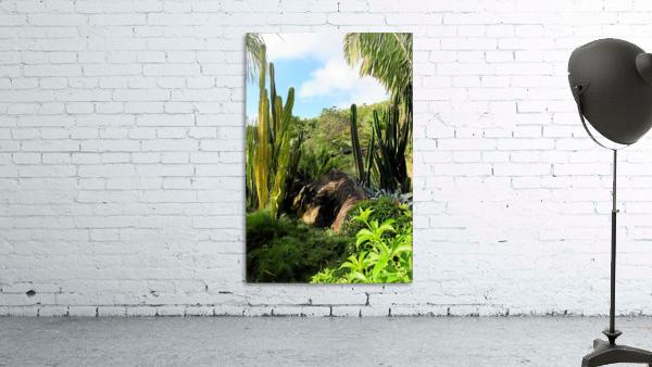 Nevis cactus