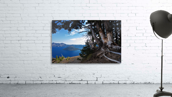 Crater Lake & Gnarled White Pine