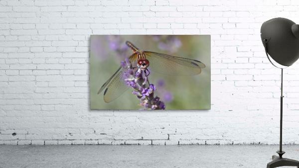 Dragonfly resting on flower.