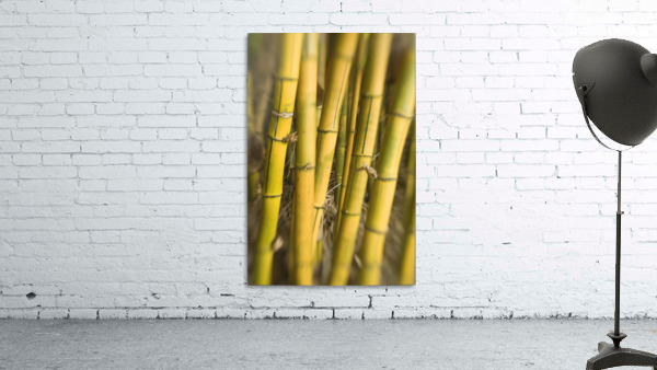 Close-Up Of Bamboo Stalks.