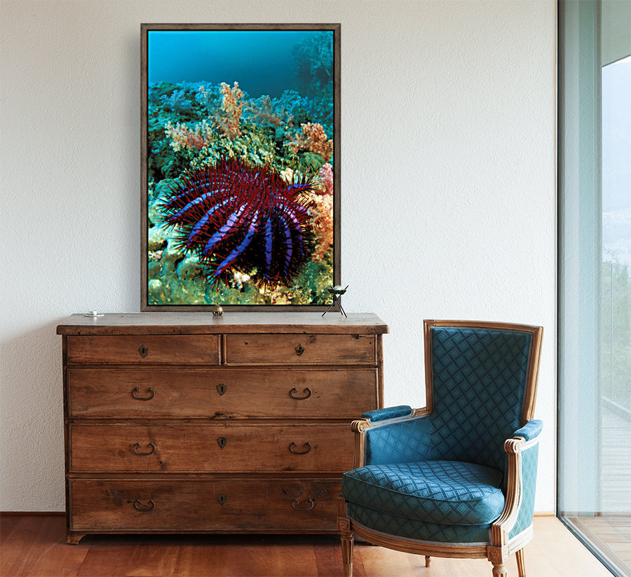 Thailand, Reef Scene With Crown-Of-Thorns Starfish (Acanthaster Planci). with Floating Frame