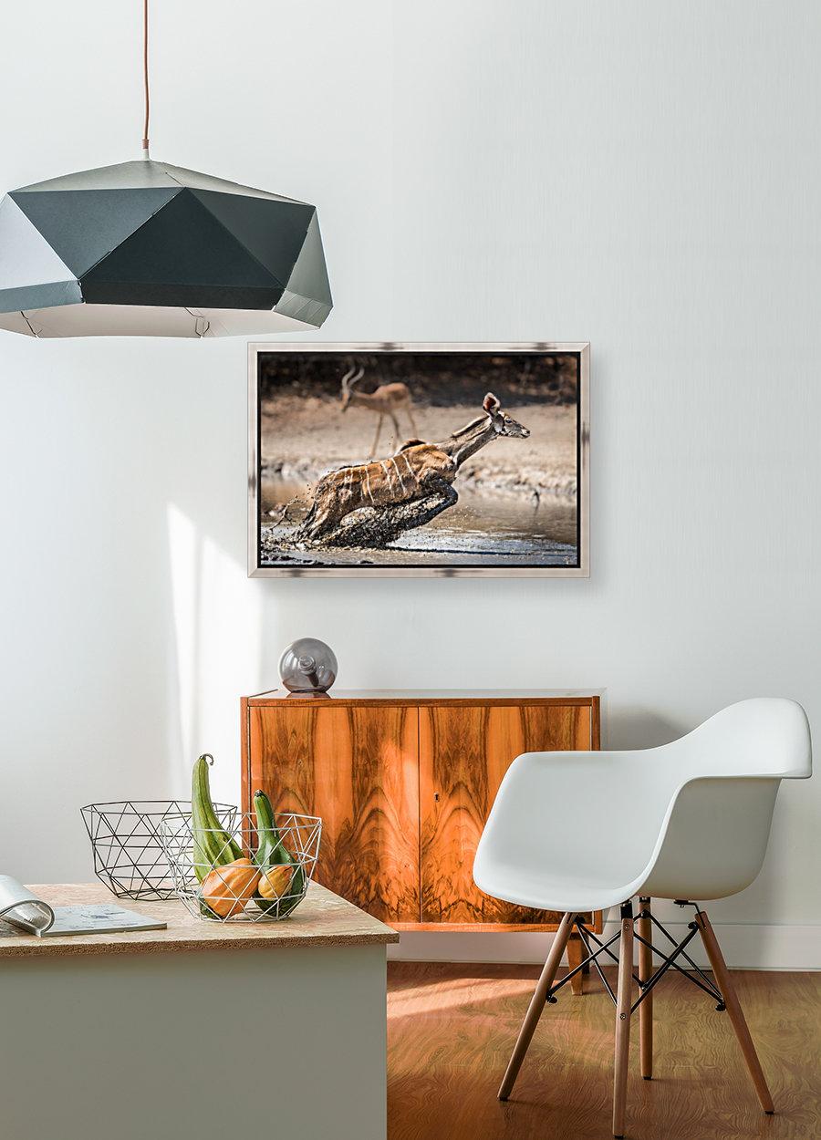 Kudu jump  Art