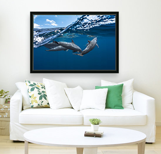 Dolphins  Art