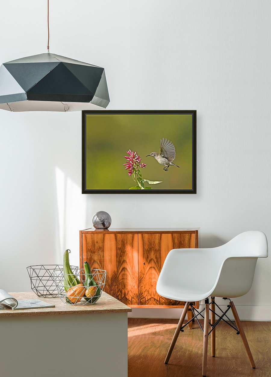 Sunbird with Floating Frame