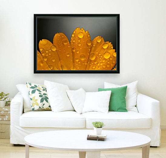Close up of water droplets on orange flower petals; South Shields, Tyne and Wear, England  Art