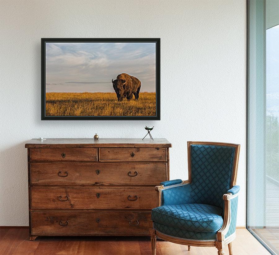 Bison (bison bison), Grasslands National Park; Saskatchewan, Canada  Art