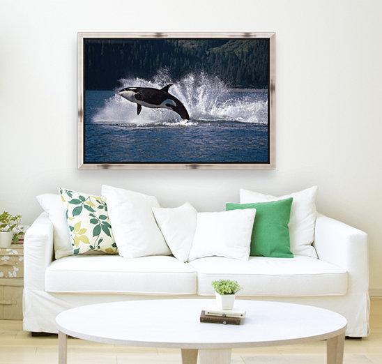 Double Breaching Orcas Bainbridge Passage Prince William Sound Alaska Summer Southcentral  Art