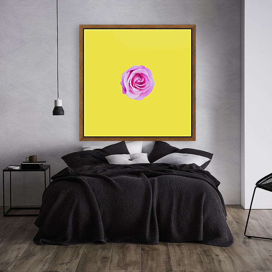 closeup pink rose with yellow background  Art