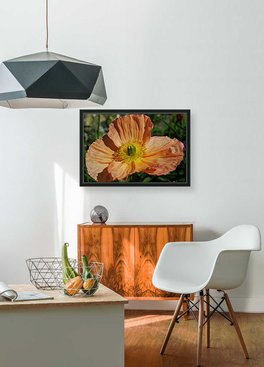 A Poppy Flower Growing with Floating Frame