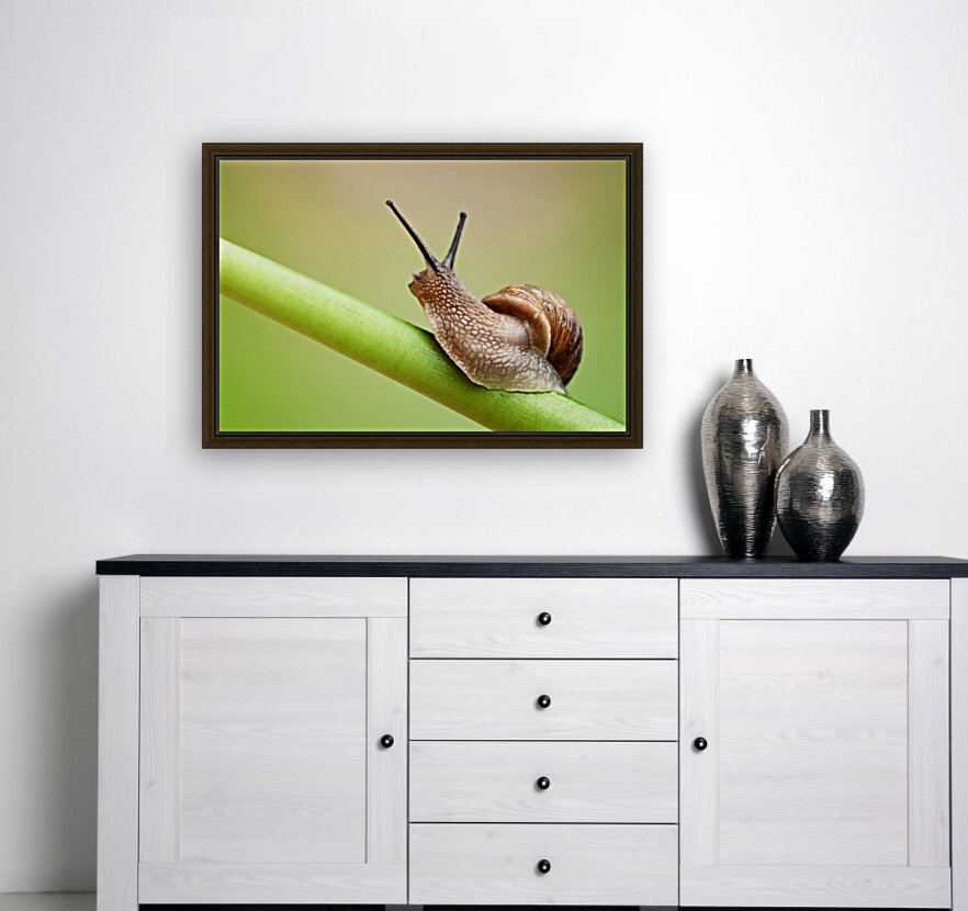Snail on green stem  Art