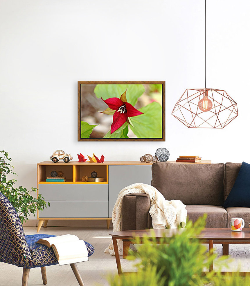 Red Trillium with Floating Frame